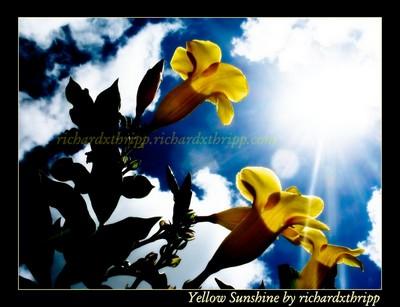 Yellow Sunshine (edited)